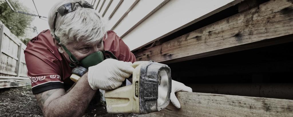 termite inspection melbourne termite solutions victoria. Black Bedroom Furniture Sets. Home Design Ideas