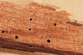 How To Treat Wood Borer In Furniture