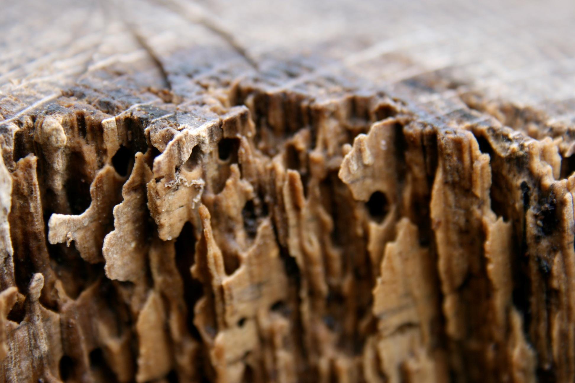 Termite Damage Wood Furniture